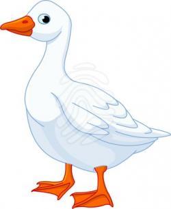 Duck clipart goose