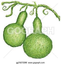 Gourd clipart calabash