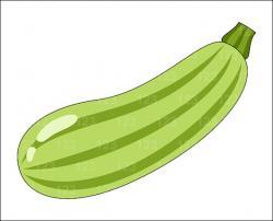 Zucchini clipart single vegetable