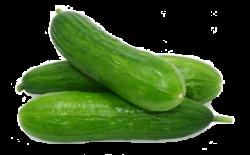 Cucumber clipart transparent