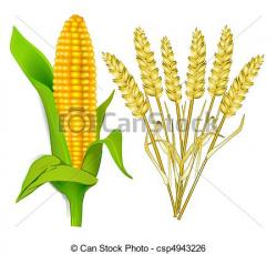 Korn clipart corn stalk