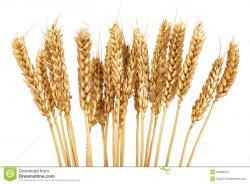 Korn clipart grain