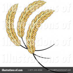 Barley clipart wheat