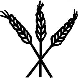 Barley clipart grain