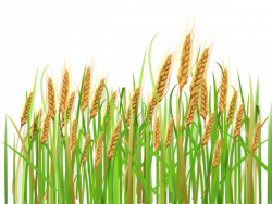Feilds clipart wheat field