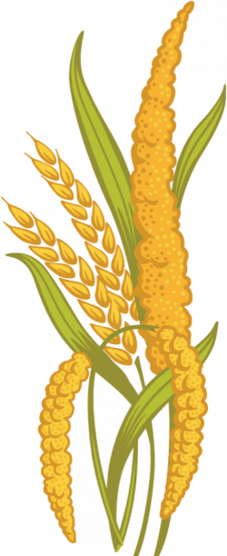 Grains clipart millet