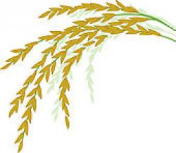 Grains clipart palay