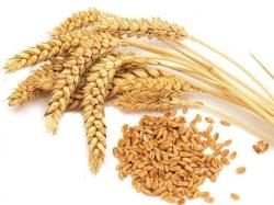 Seeds clipart wheat seed
