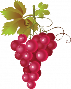 Currants clipart grape vine