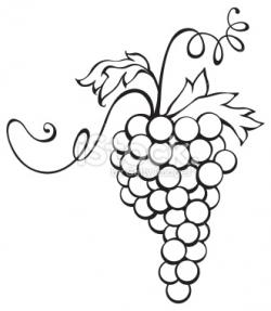 Drawn grapes cluster