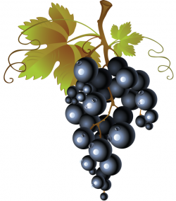 Currants clipart grape tree