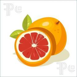 Grapefruit clipart