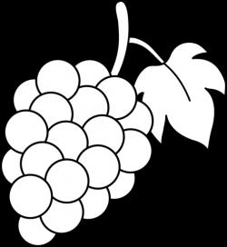 Drawn grapes black and white
