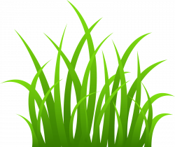 Blade clipart seagrass