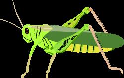 Locust clipart animal