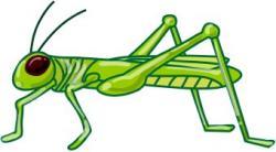 Locust clipart grasshoper