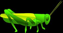 Grasshopper clipart cartoon