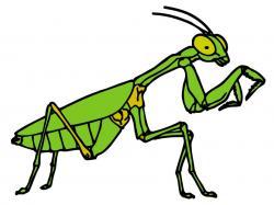 Praying Mantis clipart grasshopper