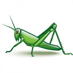 Cricket clipart grasshopper