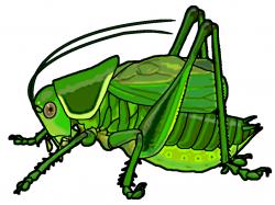 Cricket clipart katydid