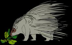 Porcupine clipart gray