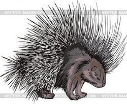 Porcupine clipart vector