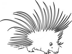 Porcupine clipart black and white
