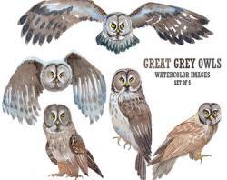 Great Grey Owl clipart california