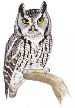 Barred Owl clipart icon