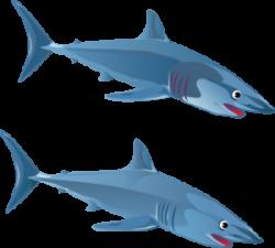Shark clipart vertebrate