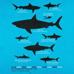 Great White Shark clipart human scale