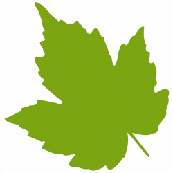 Birch clipart transparent