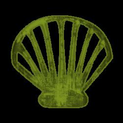 Shell clipart shellfish