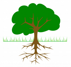 Roots clipart transparent