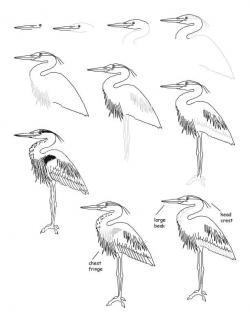 Drawn feather heron