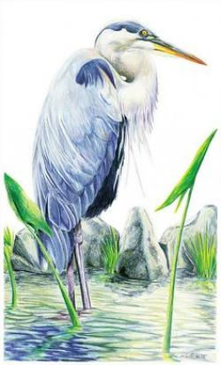 Great Blue Heron clipart marsh grass