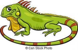 Green Iguana clipart