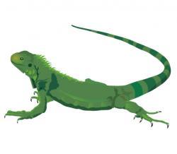 Chameleon clipart iguana