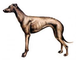 Greyhound clipart face