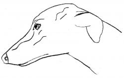 Greyhound clipart head