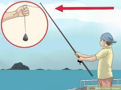 Grouper clipart fishing bait