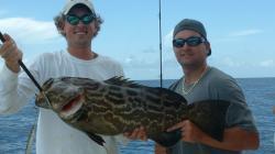 Grouper clipart gulf mexico