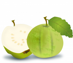 Blueberry clipart guava