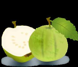Guava clipart single