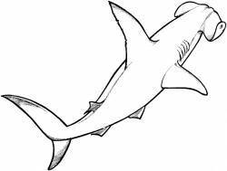 Hammerhead Shark clipart line drawing