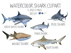 Sharkwhale clipart full grown