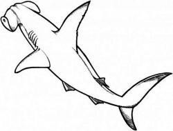 Drawn shark hammerhead shark