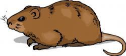 Capybara clipart hampster