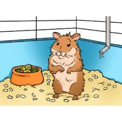 Hamster clipart hamster cage