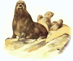 Sea Lion clipart flipper